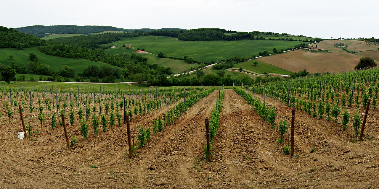 1280px-vineyard_in_montepulciano_tuscany-also_example_of_clear_cultivation
